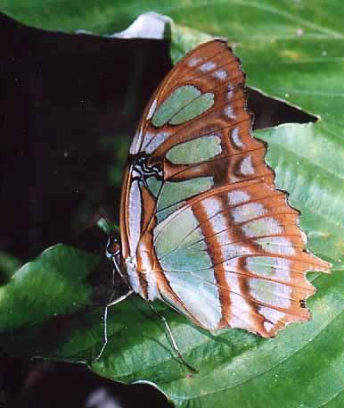 butterflyb.jpg
